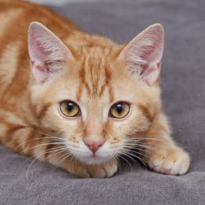 Read more about the article Mousse, le chaton maladroit